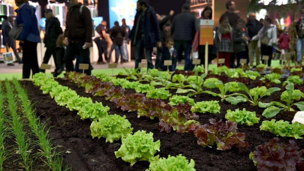 """La FNSEA va proposer """"200 solutions"""" pour réduire l'usage des  produits phytosanitaires"""