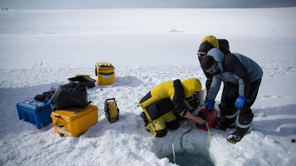 Sous la glace, la vie: un robot filme sous l'Antarctique