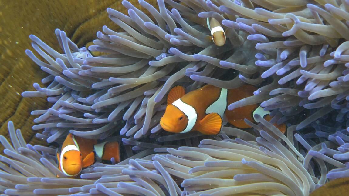 Grande barrière de corail: un coeur de récifs résiste au blanchissement