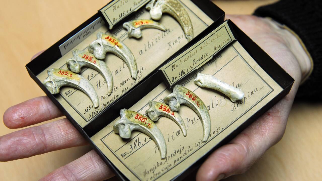 Quand l'homme de Néandertal s'improvisait dentiste