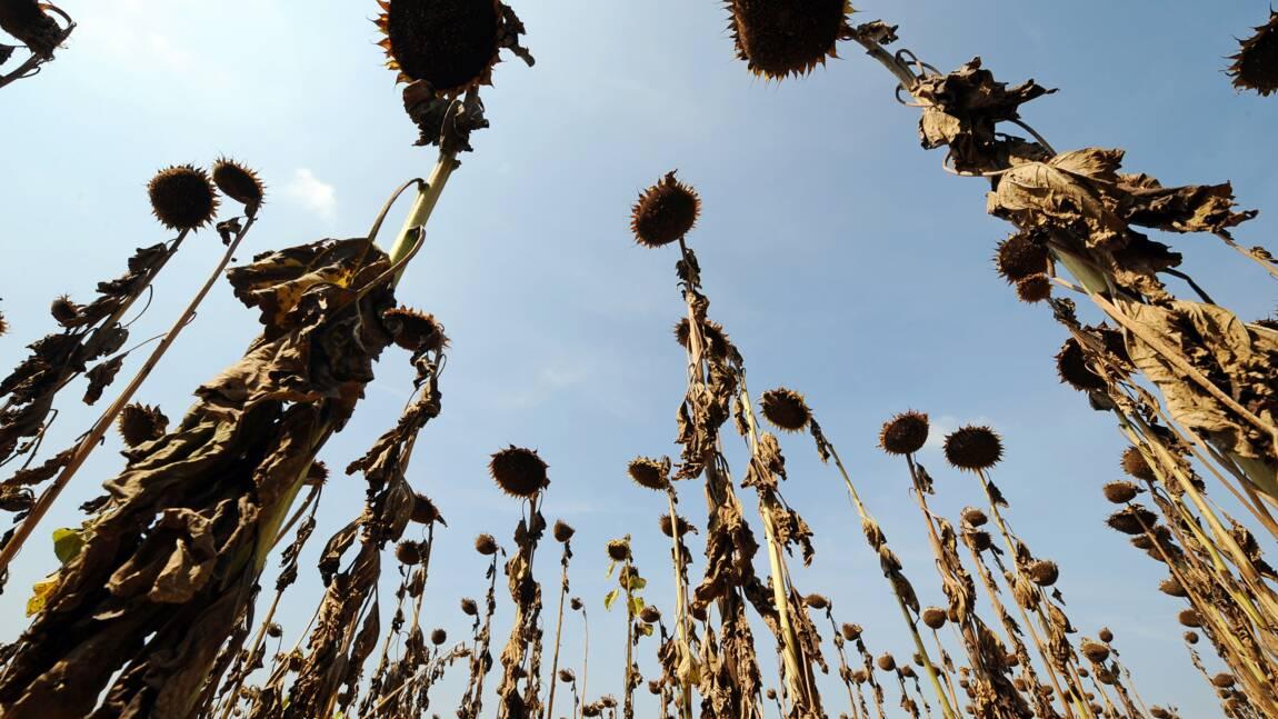 L'été s'annonce chaud, dans une France qui subit déjà des sécheresses