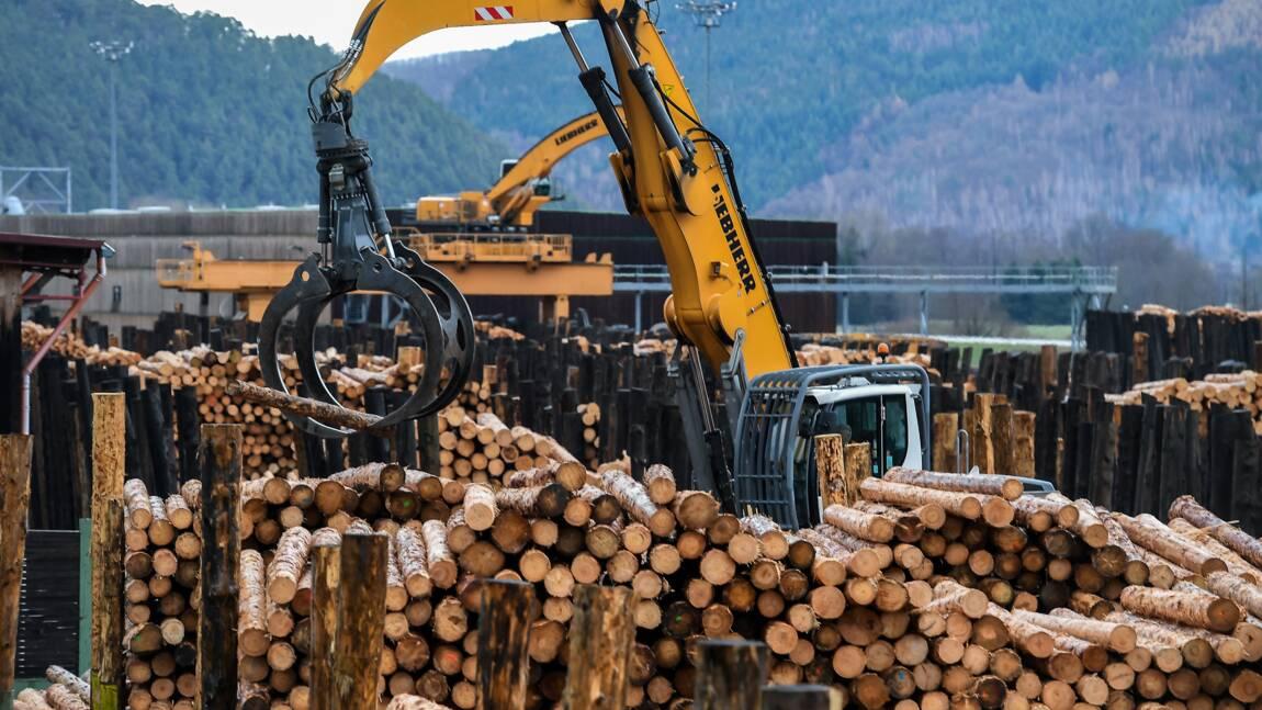 Au milieu de la forêt, les scieurs parient sur la construction en bois