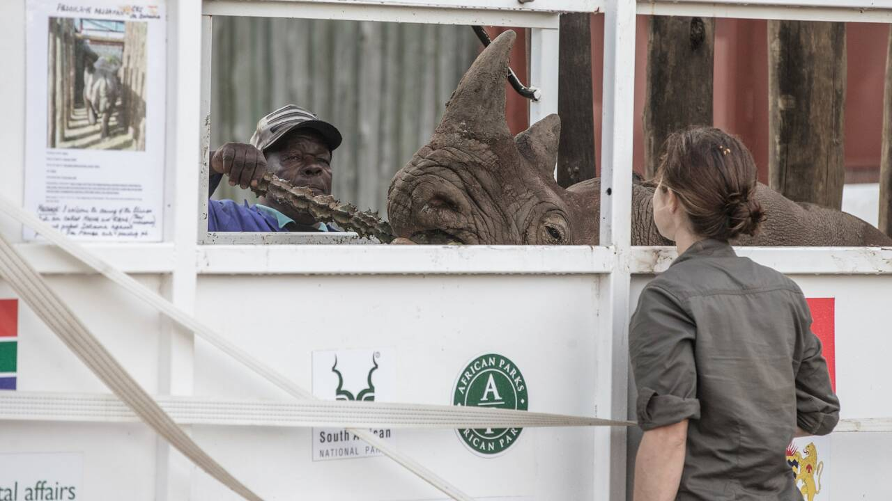 Six rhinocéros noirs sud-africains en route pour le Tchad