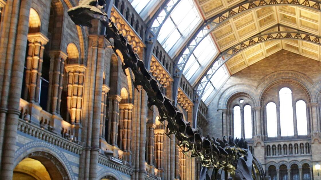 Dippy le diplodocus quitte le Musée d'Histoire naturelle de Londres