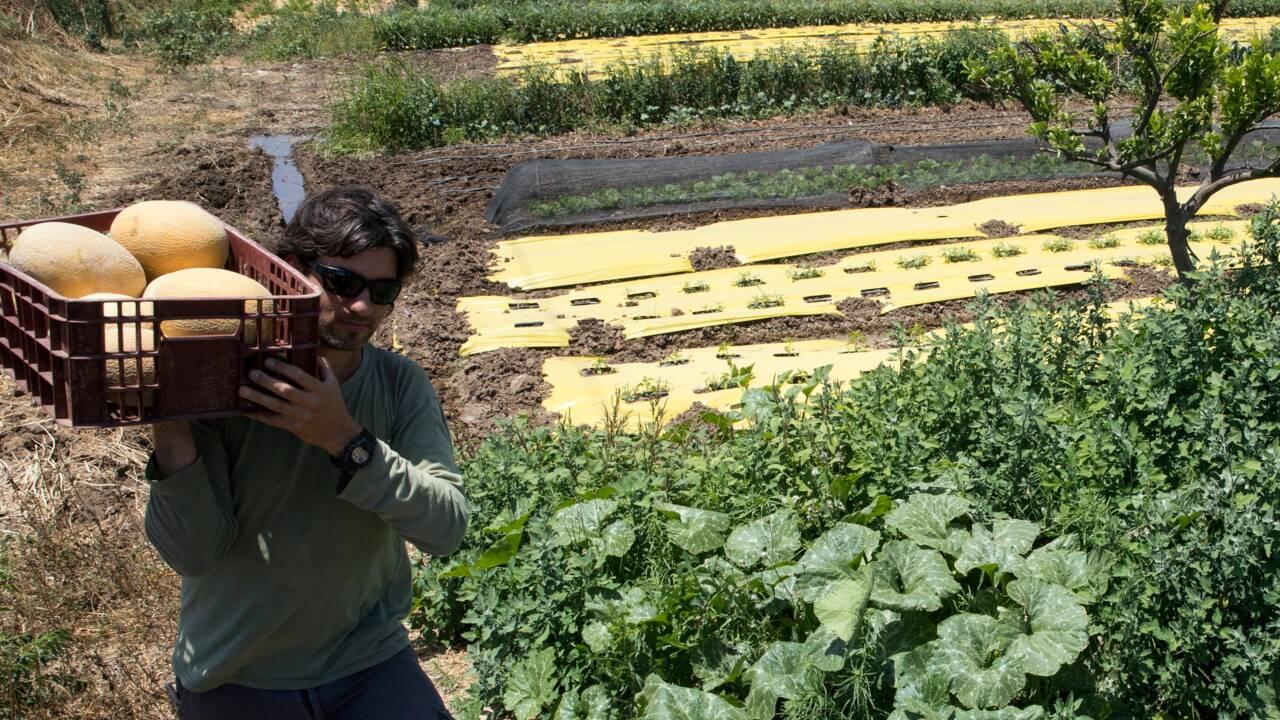 De la high-tech aux légumes bio au pays des startups
