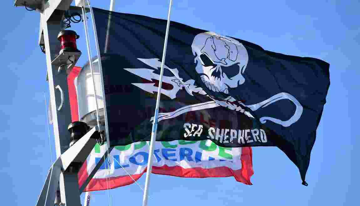 Chasse à la baleine aux Féroé: Sea Shepherd presse l'UE
