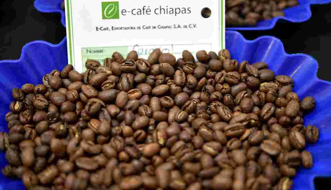 Réchauffement climatique: la production de café latino-américaine en danger