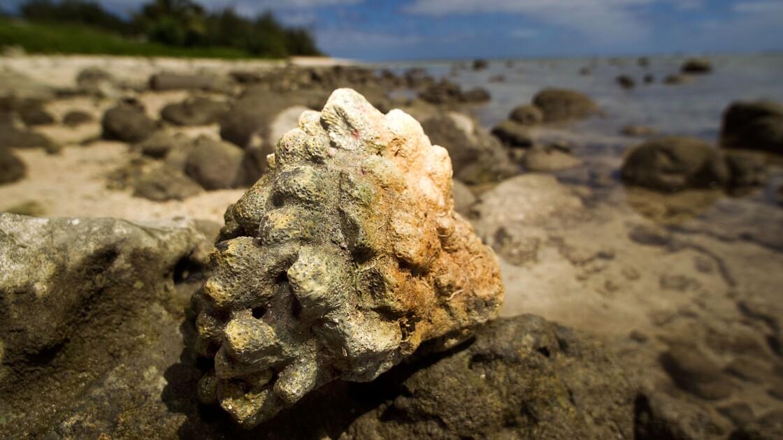 La survie des récifs coralliens, suspendue à la baisse de la pollution (étude)