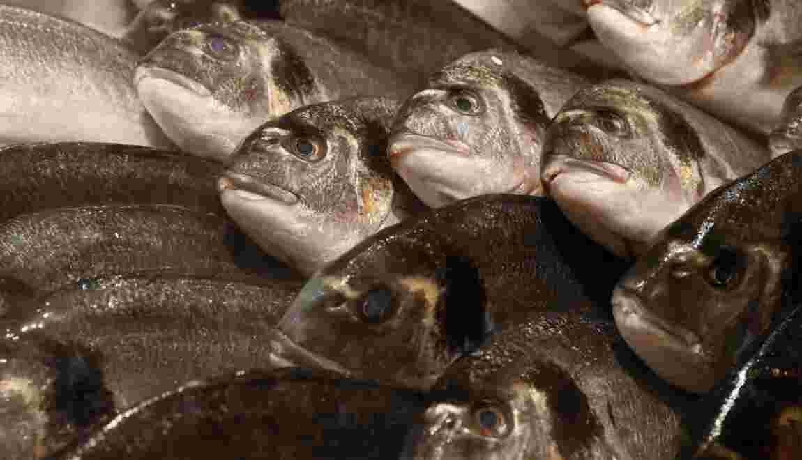 Pêche: l'océan se vide, l'aquarium se remplit