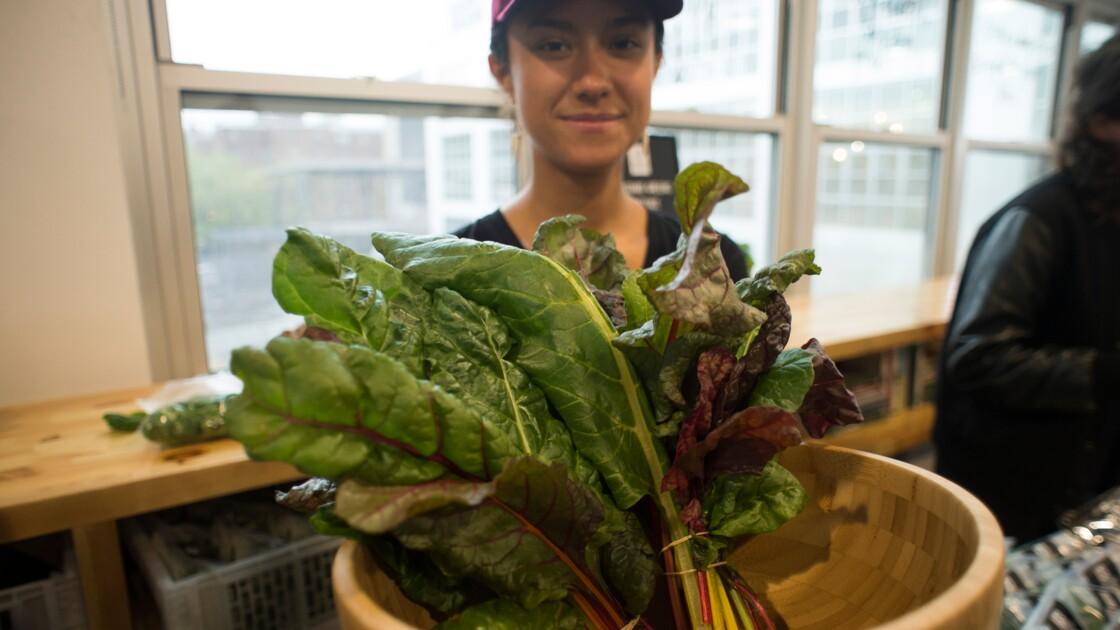 Contre la malbouffe, une autre agriculture fleurit à New York