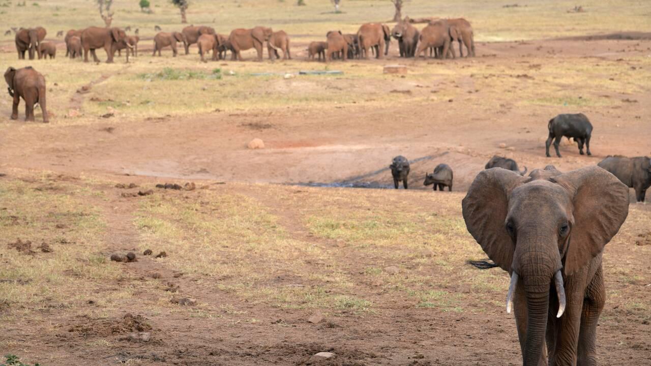 Centrafrique: les grands mammifères, victimes collatérales du conflit