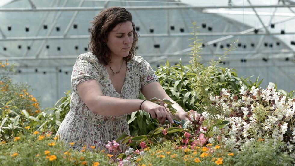 """En hydroponie et aquaponie, le """"jardin extraordinaire"""" de Lucille alimente les grands chefs"""