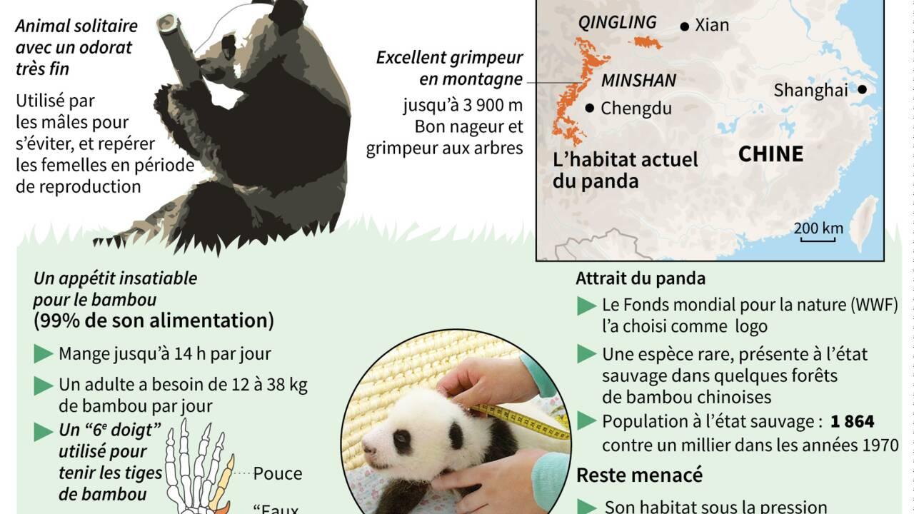La population de pandas grandit, pas leur territoire