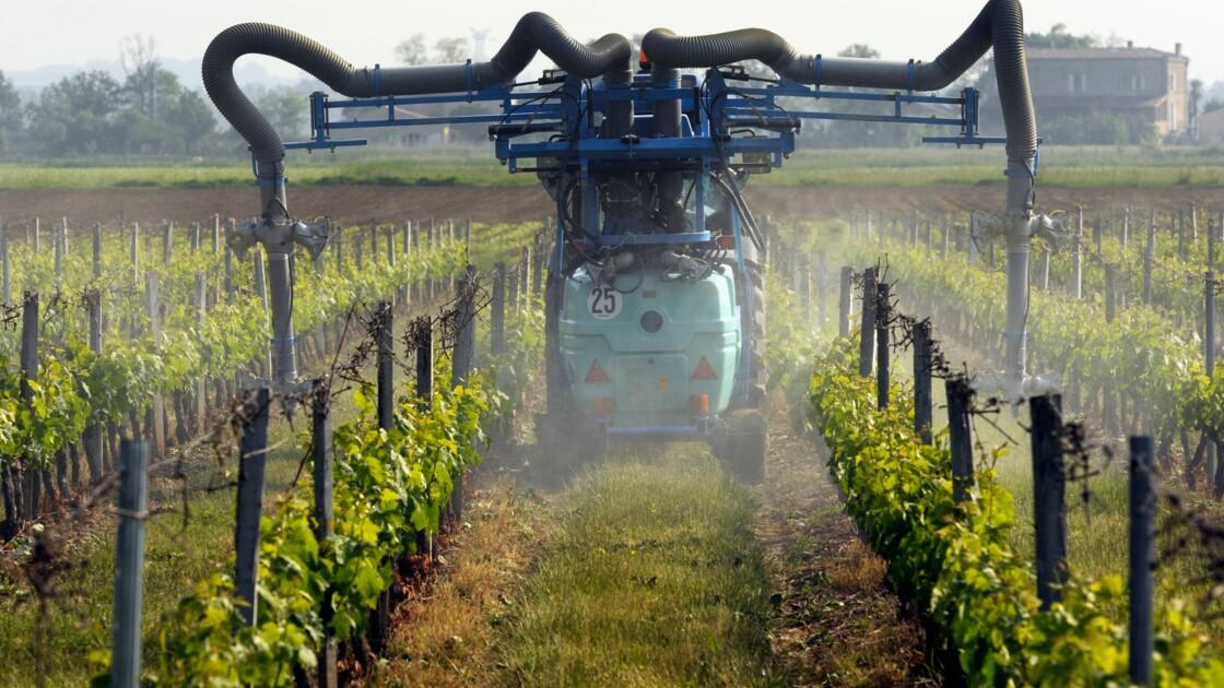 Gironde: non-lieu pour l'épandage de pesticides près d'une école