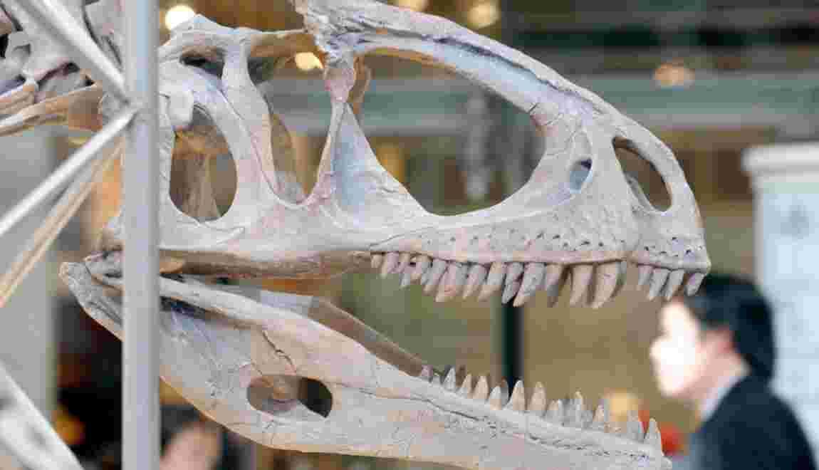 La découverte d'un dinosaure perdant ses dents pourrait expliquer le bec des oiseaux