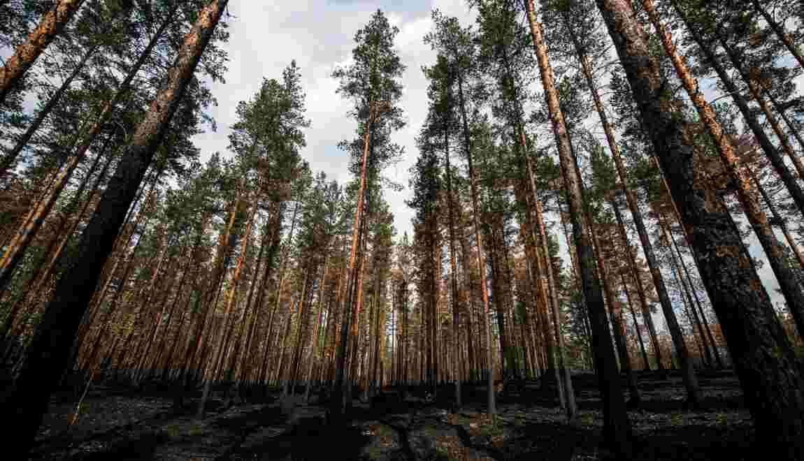 Or vert contre biodiversité: à l'heure des feux, la forêt suédoise fait débat