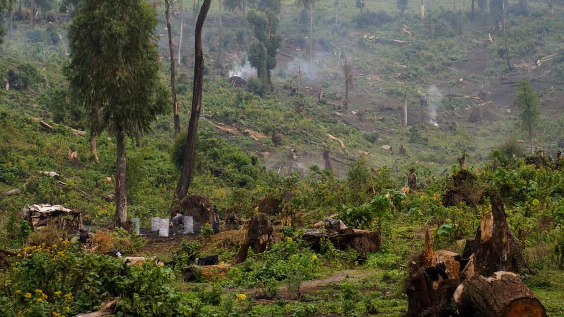 """RDC: Greenpeace """"choquée"""" par l'expulsion d'un documentariste français"""