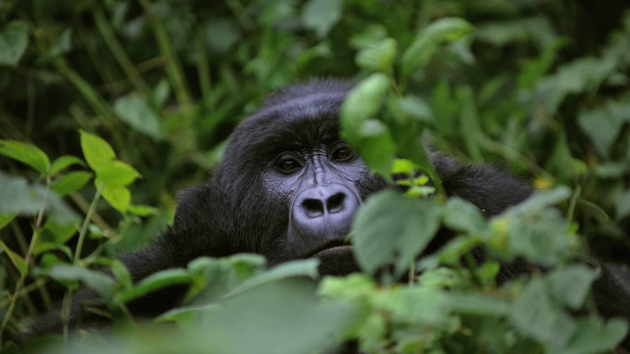 Six trafiquants présumés d'animaux arrêtés depuis février en Guinée