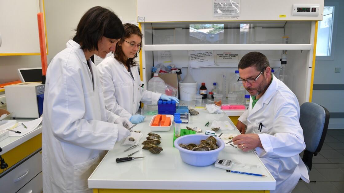 """""""Vivaldi"""", un consortium scientifique européen pour sauver les coquillages malades"""
