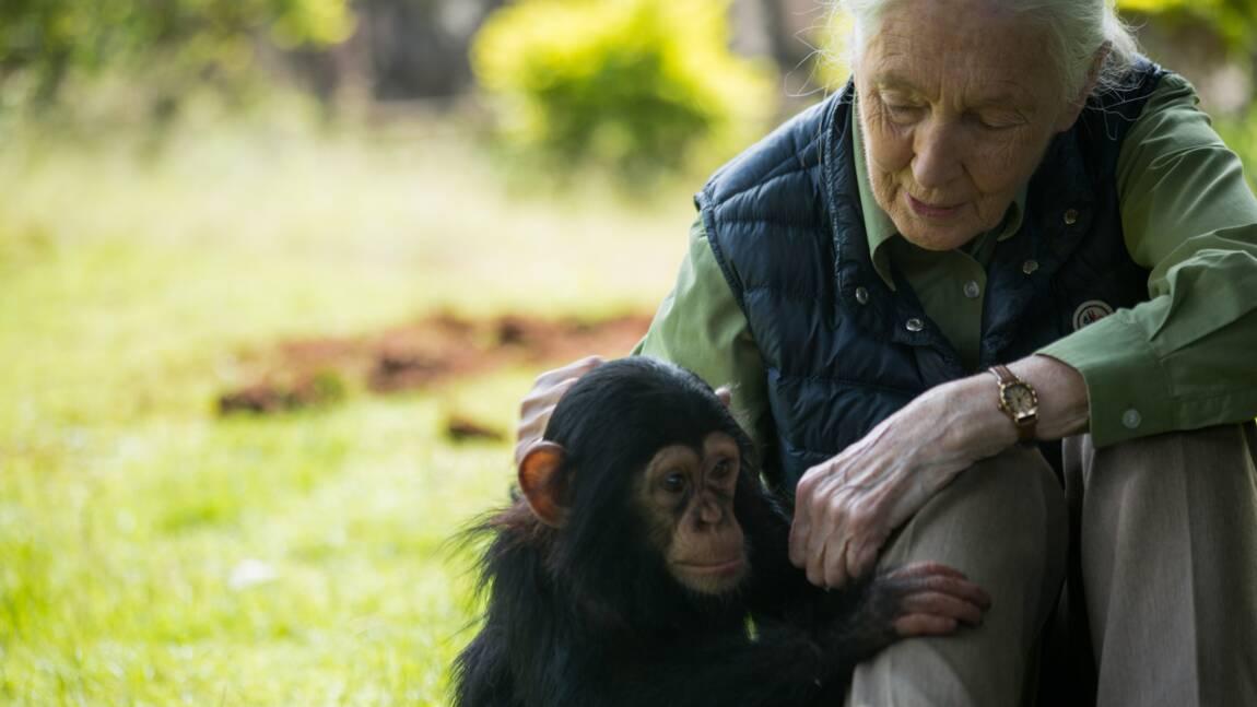 "Environnement: Jane Goodall et Edgar Morin appellent au ""sursaut"""