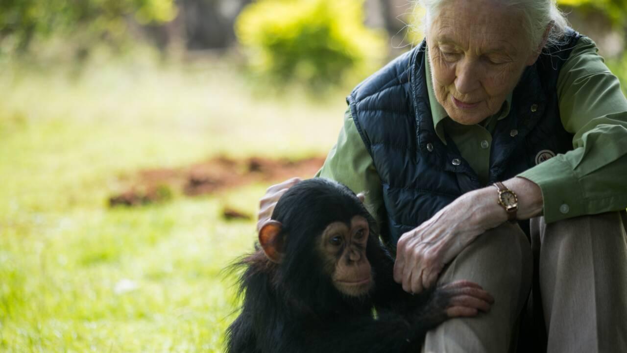 """La démission de Hulot, """"tragédie"""" pour Jane Goodall et Edgar Morin"""
