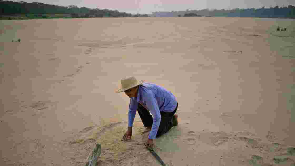 Au Brésil, les coupes budgétaires menacent la biodiversité de l'Amazonie