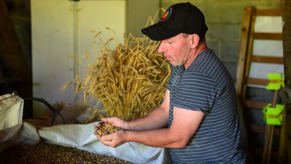 """En Dordogne, le """"maïs paysan"""" pour sauvegarder la biodiversité"""