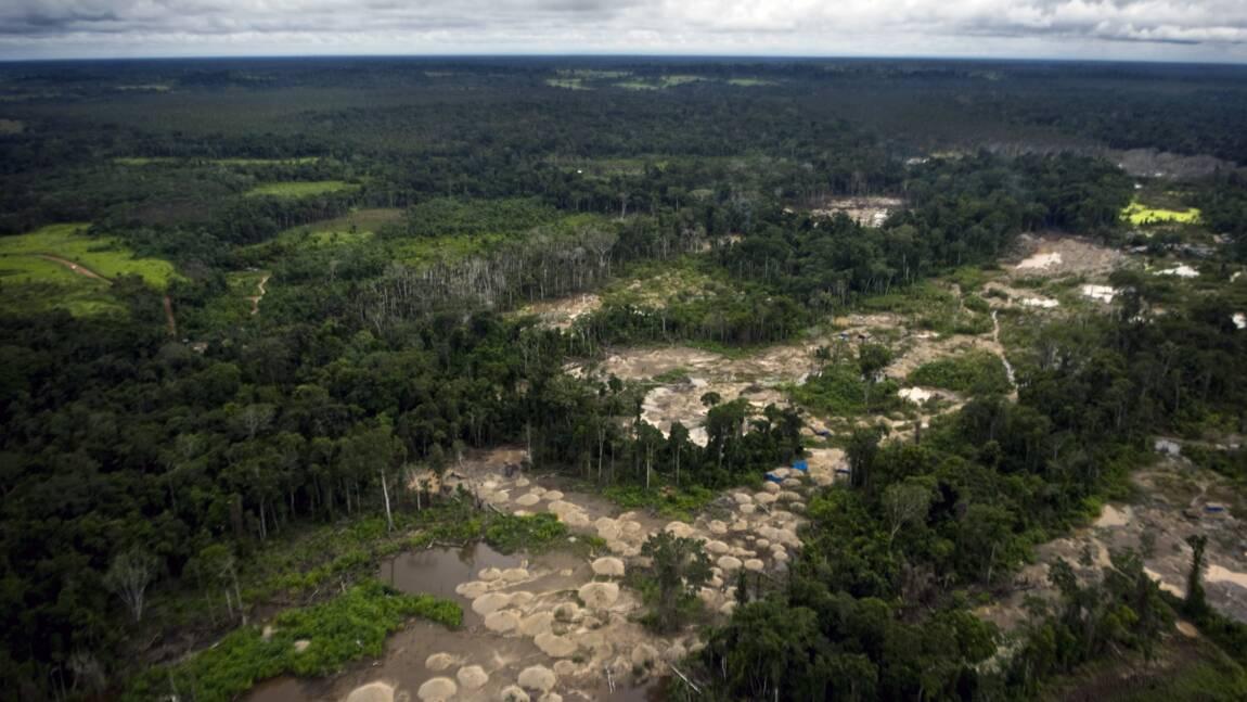 L'Amazonie péruvienne grignotée de 120.000 ha chaque année
