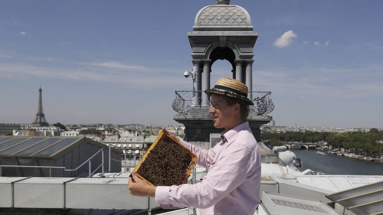 Happy apiculteur urbain, des toits de Paris aux catacombes