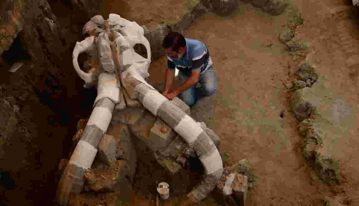 Les derniers mammouths d'Alaska sont morts de soif il y a 5.600 ans