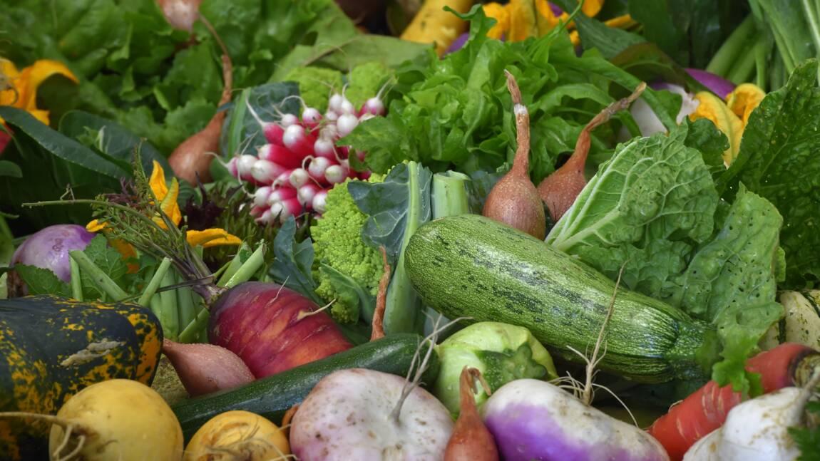 La vente de semences anciennes aux jardiniers amateurs bientôt réautorisée