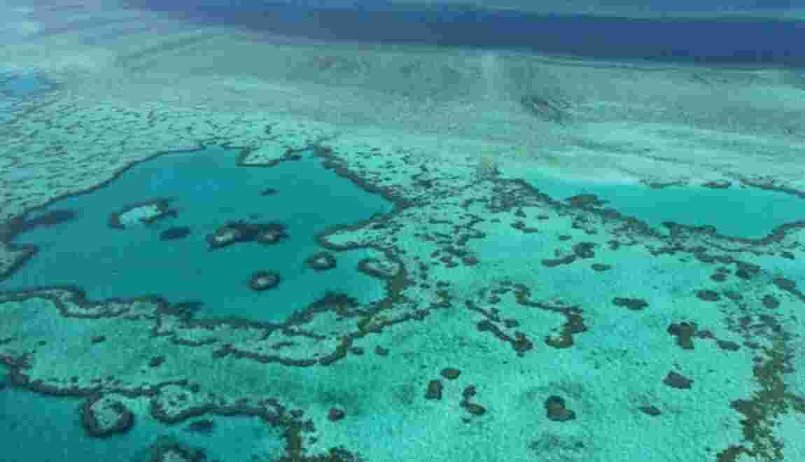 La Grande barrière de corail menacée par la pollution