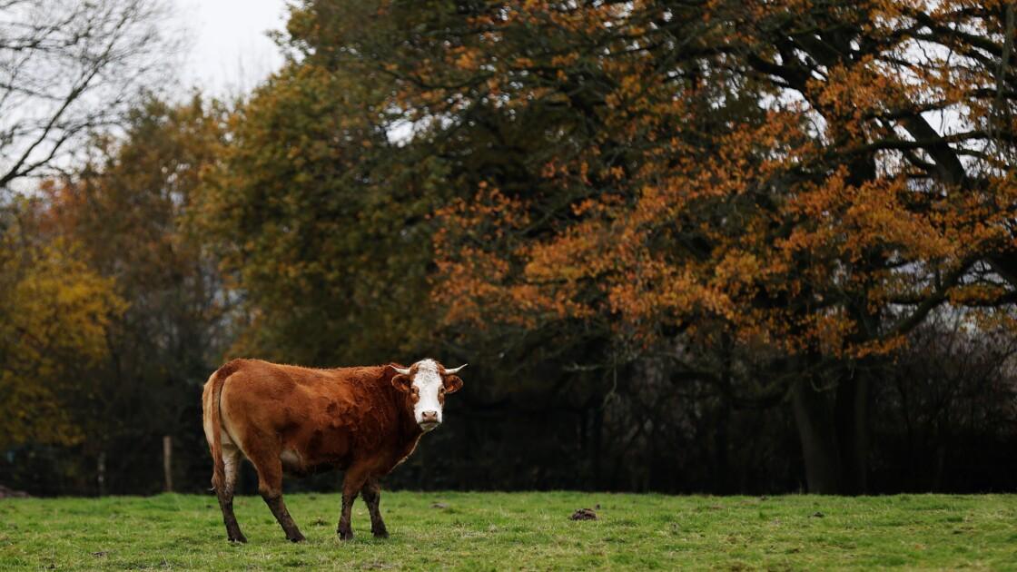 Avant de voter, les Français demandent une agriculture plus saine