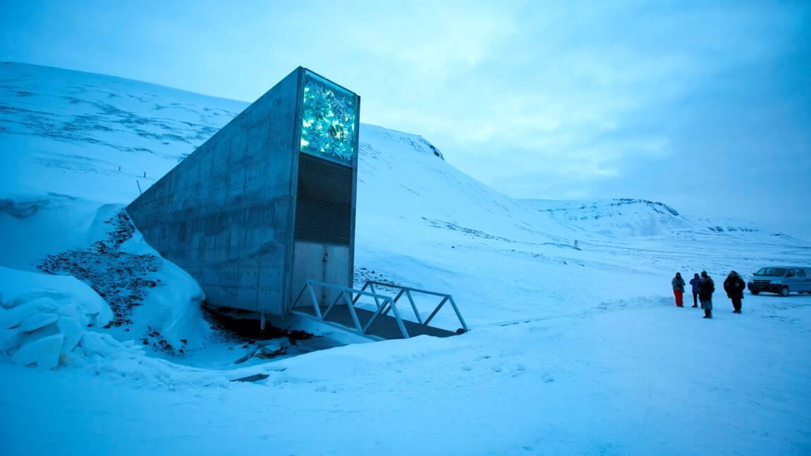 """Un Arctique plus chaud oblige l'""""Arche de Noé végétale"""" à une cure de jouvence"""