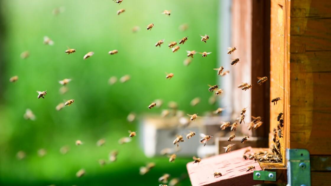 Heureux comme une abeille en Slovénie