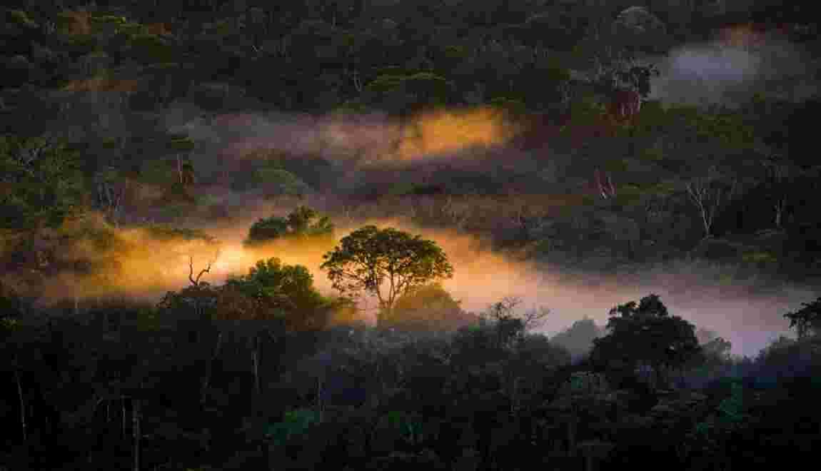 La déforestation en Colombie a augmenté de 44% en 2016