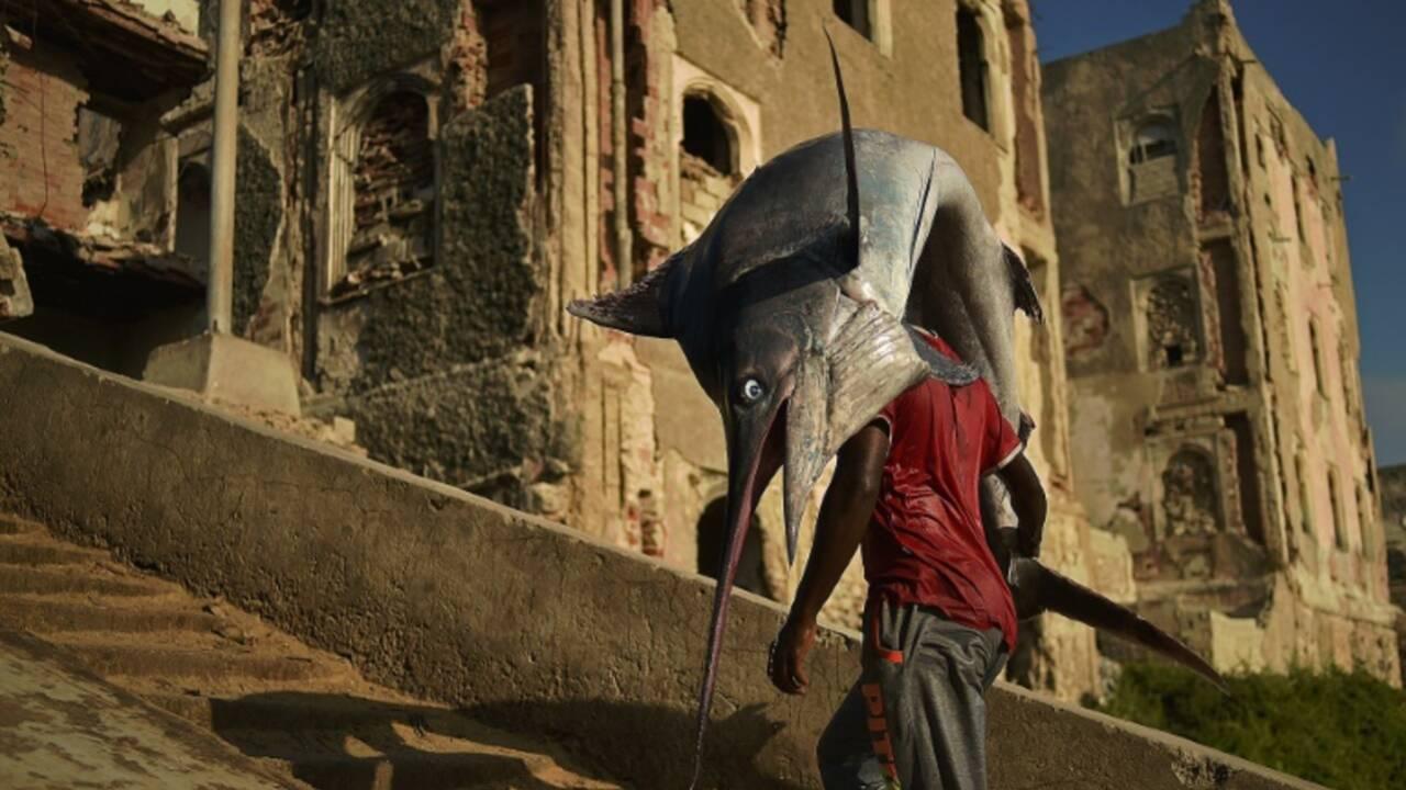 Surpêche: vers l'adoption de quotas pour l'espadon de Méditerranée