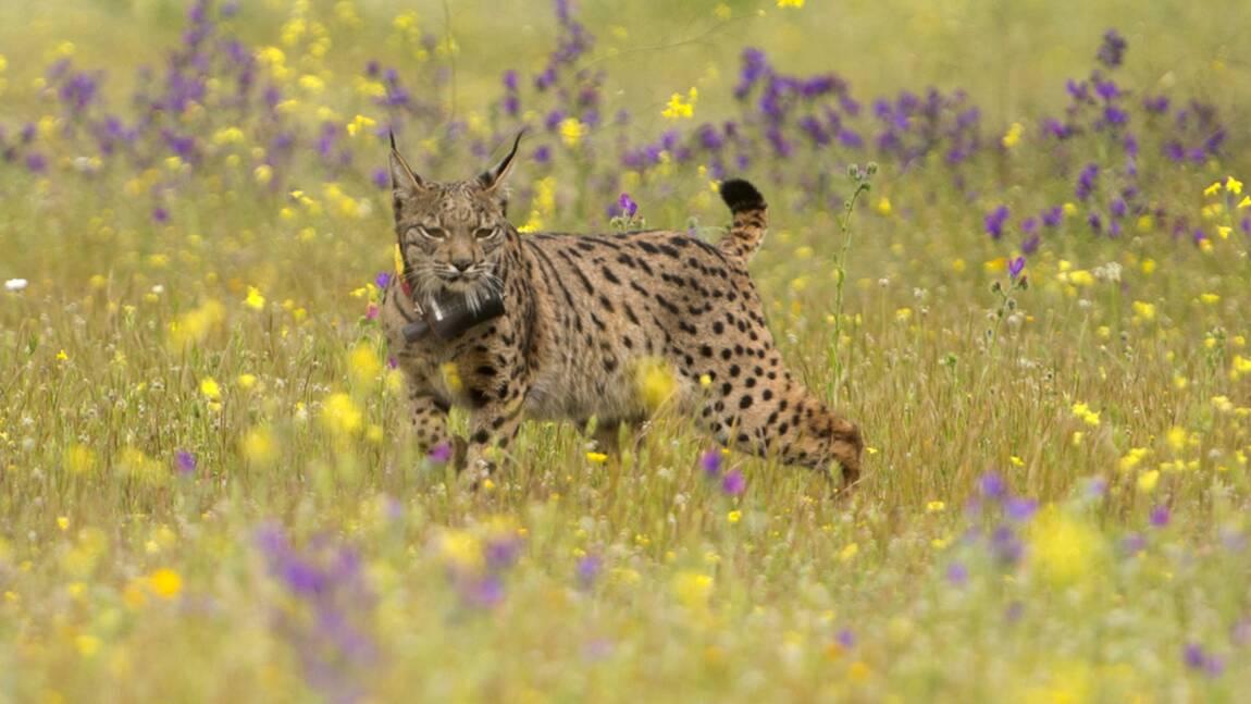 Le commerce mondial, menace croissante pour les espèces