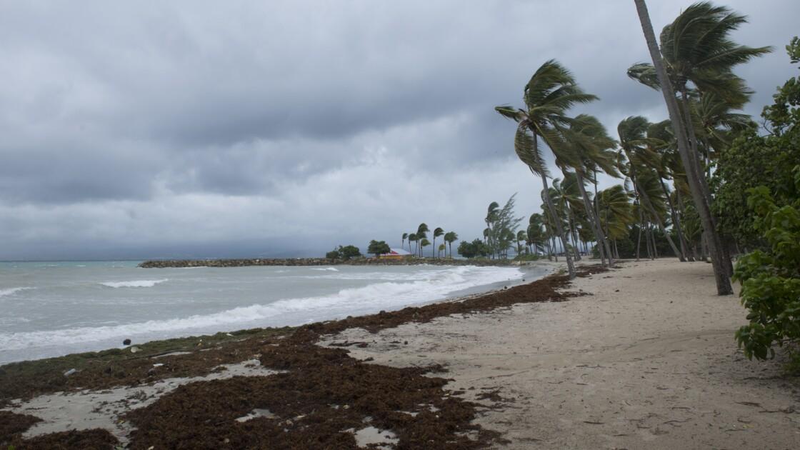 En Guadeloupe, les sargasses envahissent massivement le littoral