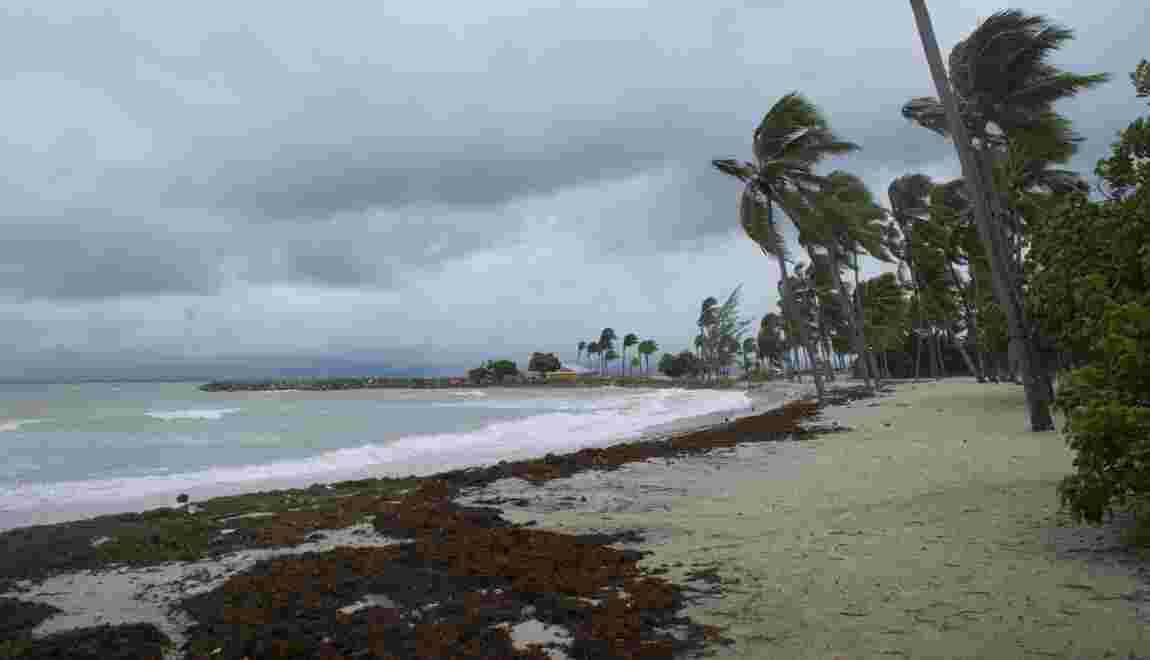 Les sargasses coupent du monde deux îles de l'archipel de Guadeloupe