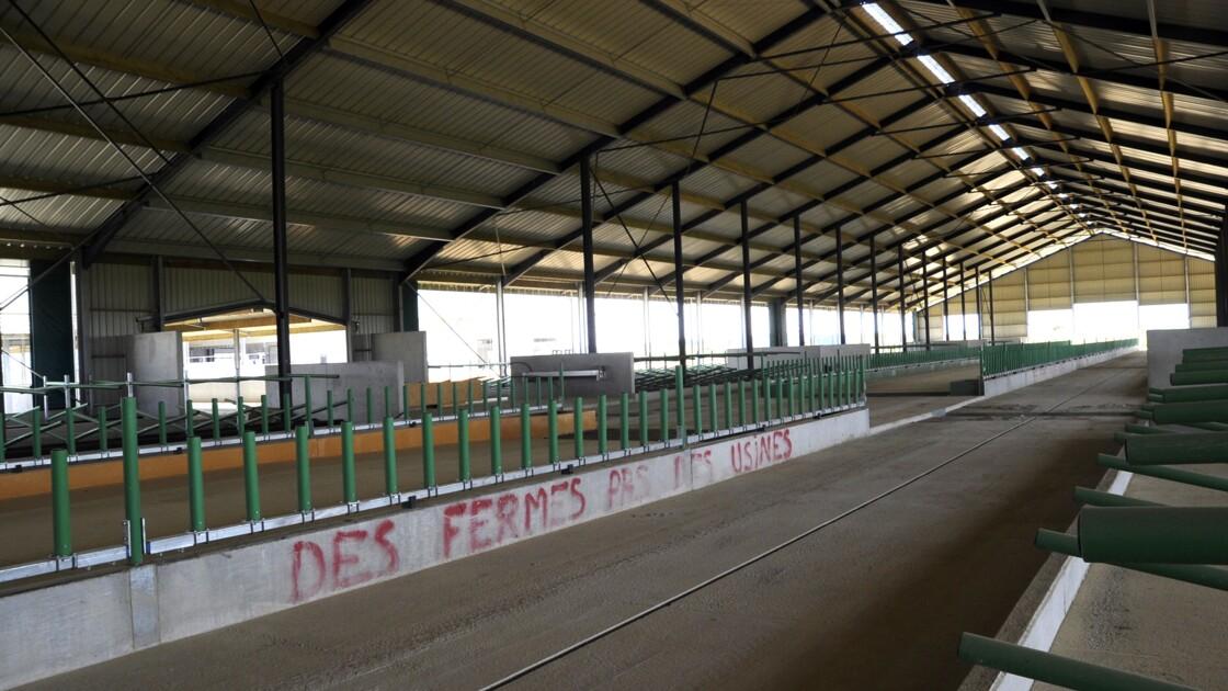 """Fermes usines: des associations demandent à la FNSEA d'arrêter sa """"course folle"""""""