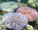 Australie: des millions pour la Grande barrière de corail
