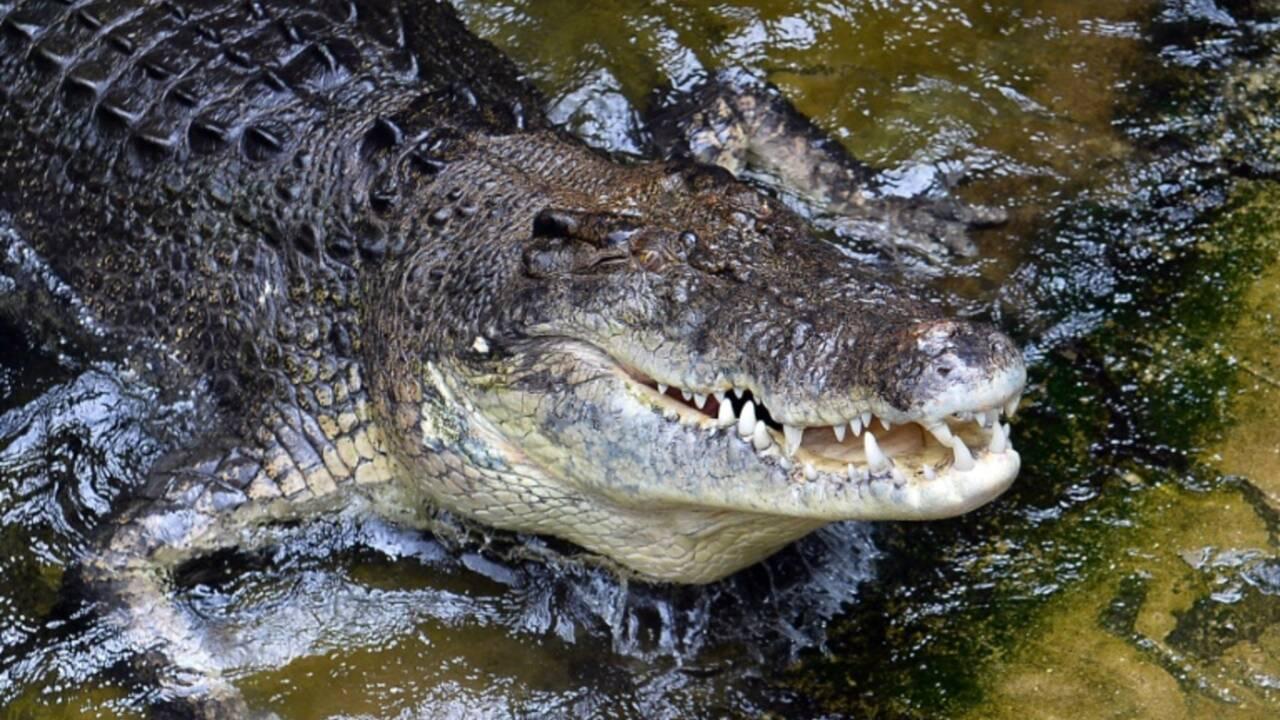 Le débat sur la chasse au crocodile géant ressurgit en Australie