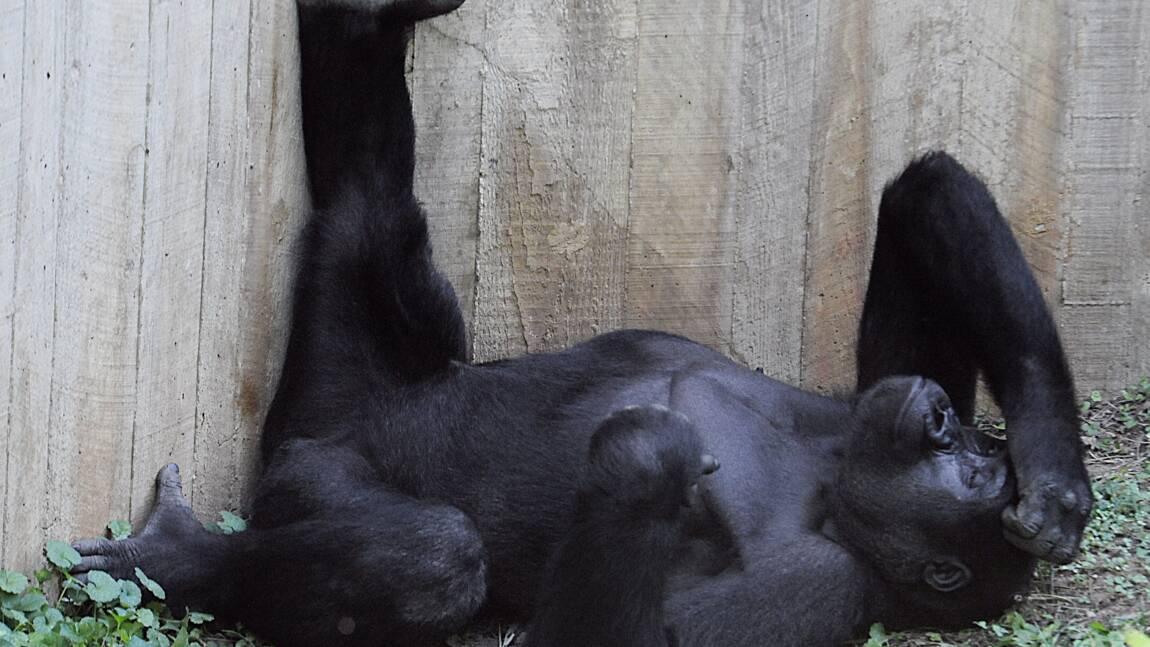 Nathalie Baye et d'autres personnalités à la rescousse des grands singes