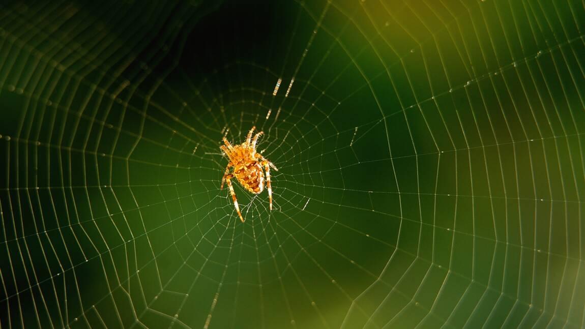 De la soie d'araignée à l'infini, un rêve beintôt réalité?