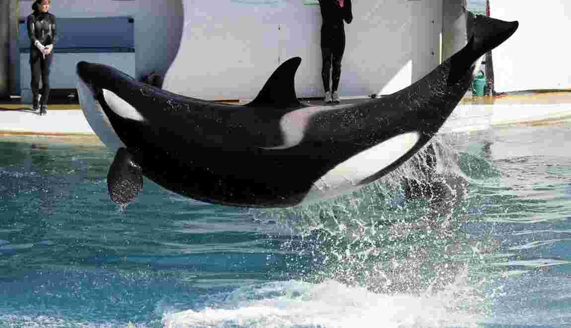 Animaux: les parcs à thème SeaWorld bientôt en Asie