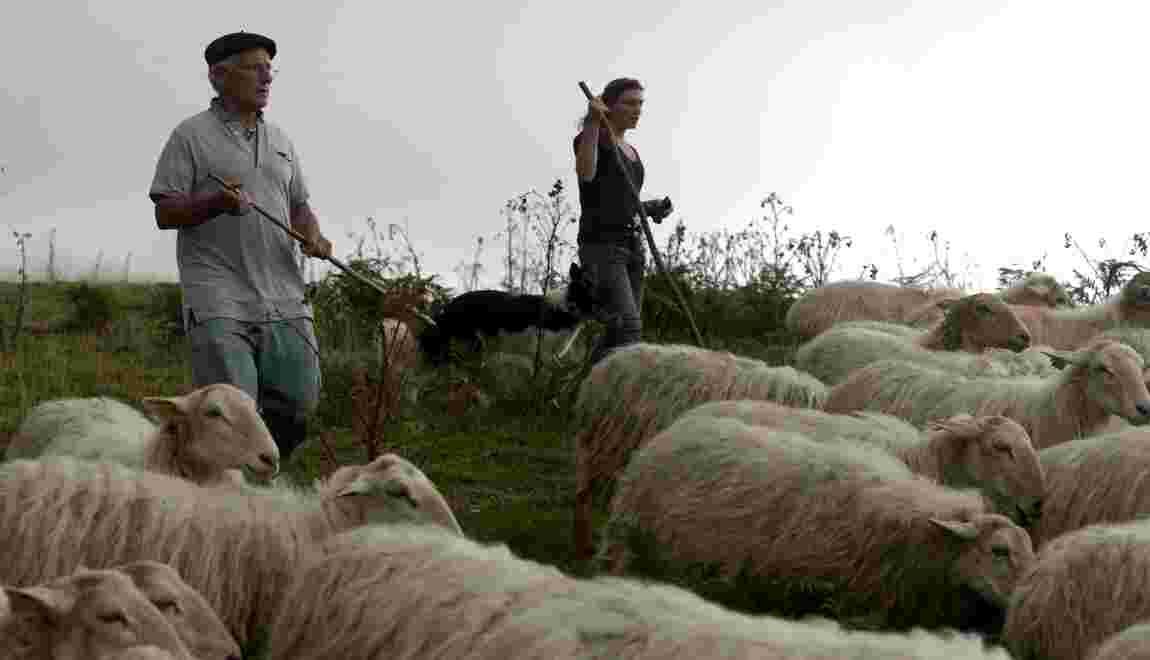 Espoirs et inquiétudes des éleveurs pyrénéens contre l'ours après le départ d'Hulot