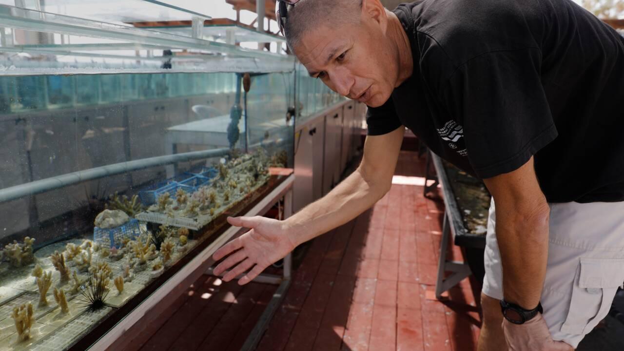 VIDÉO - Les coraux de mer Rouge font de la résistance