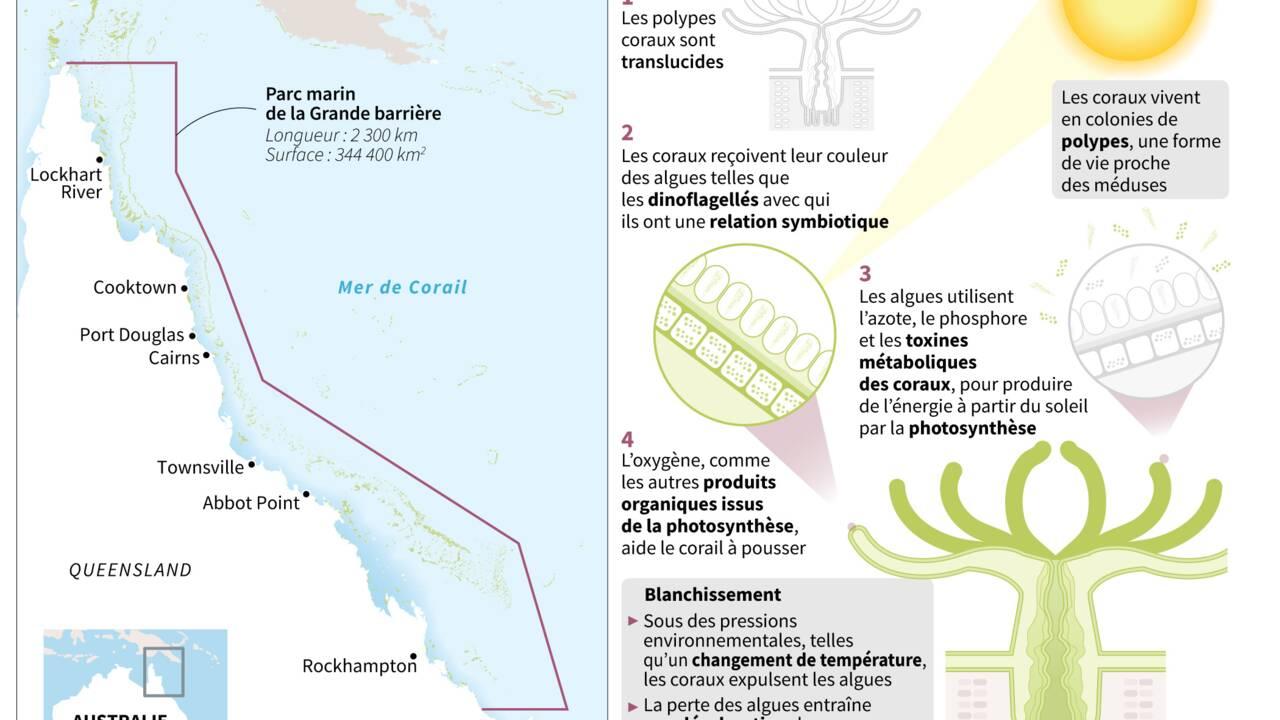 Australie: la grande barrière de corail plus que jamais menacée