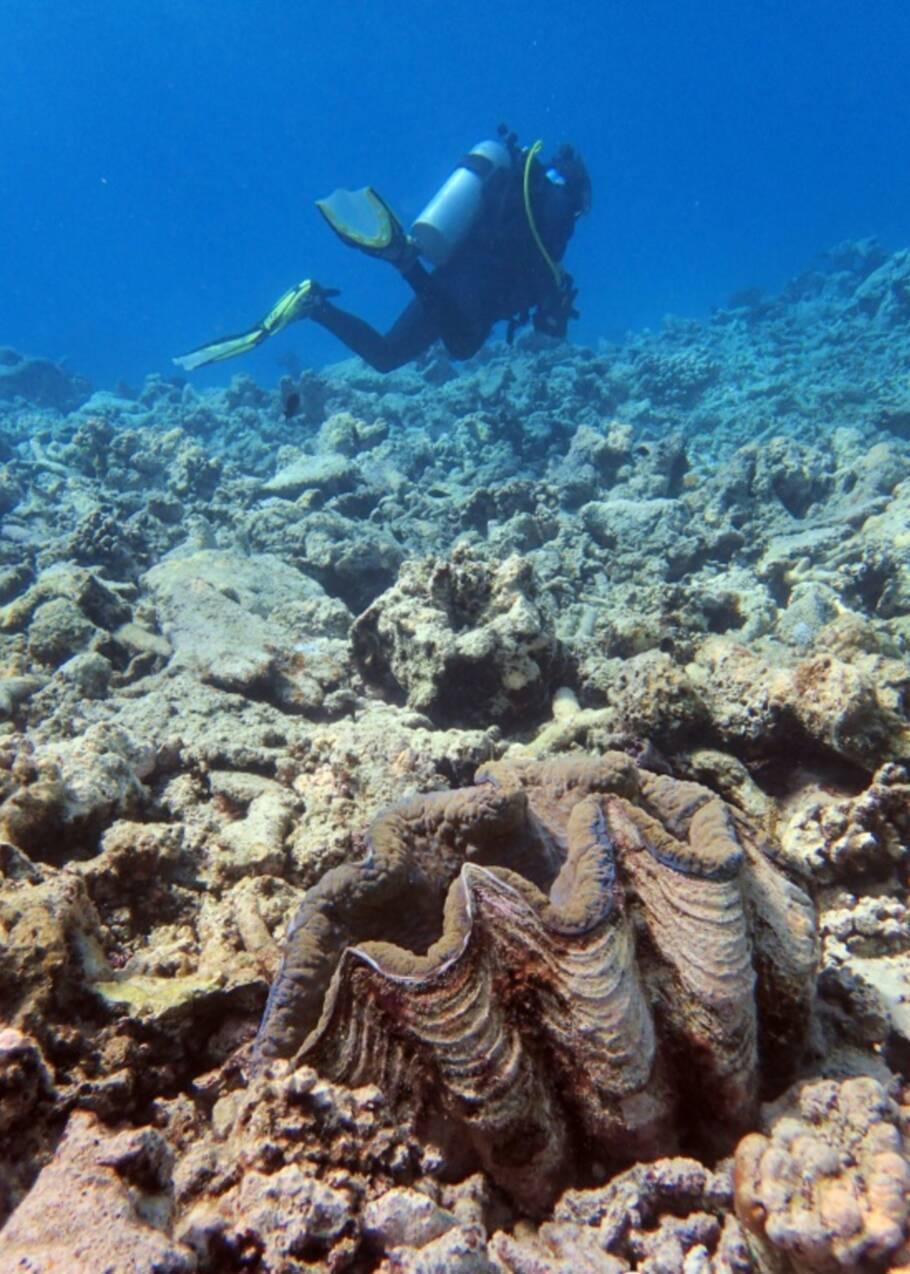 Australie: les coraux de la Grande barrière continuent de mourir